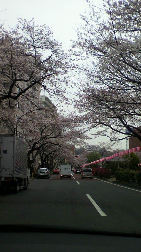 播磨坂桜並木にて